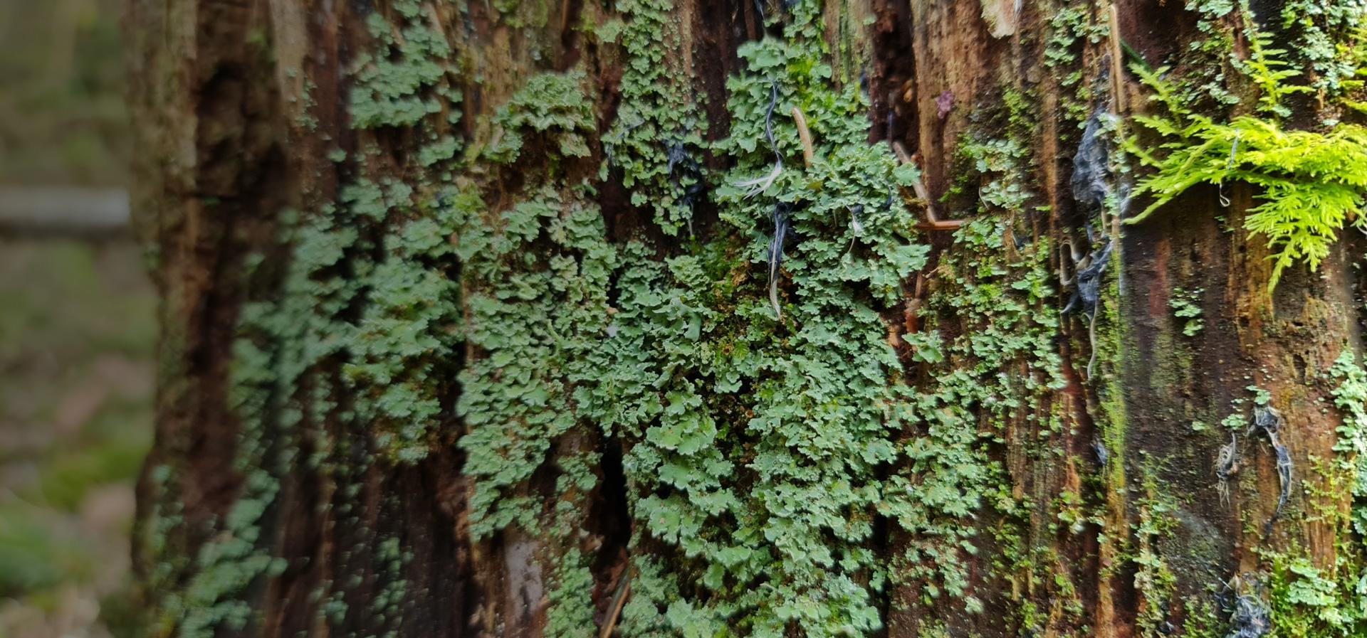 mose på tre skog